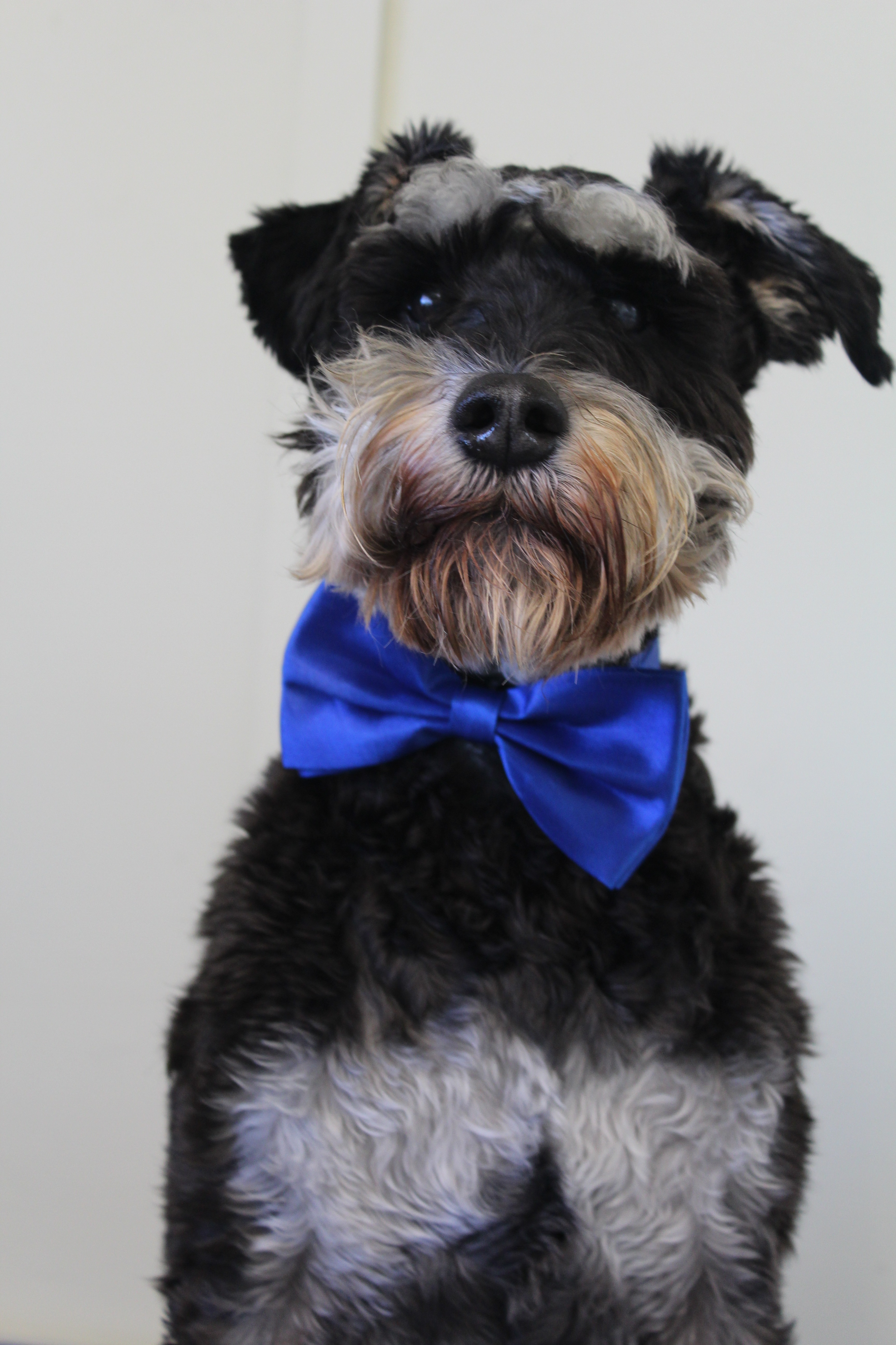 Dog Grooming Suppliers Nz