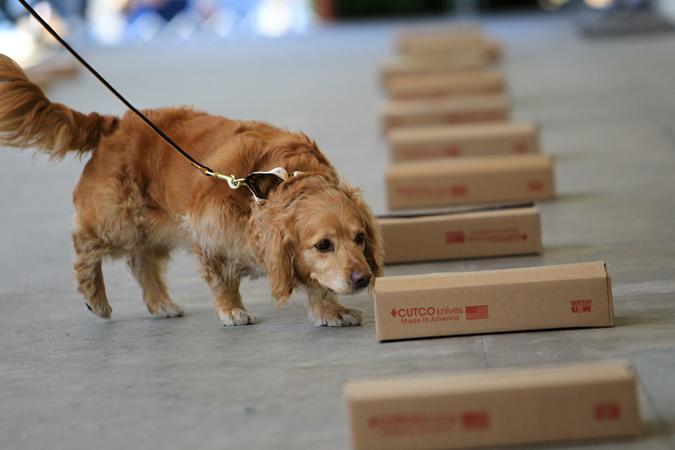 nose work dog training